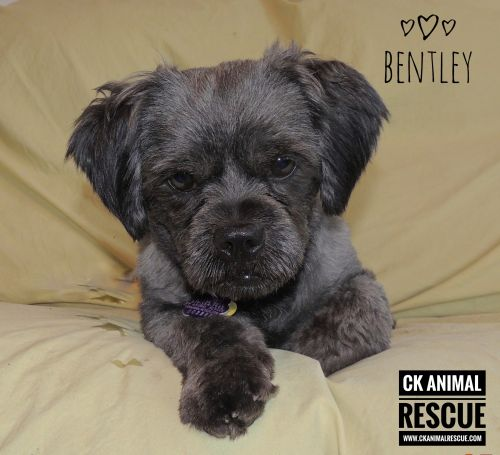 Photo of Bentley
