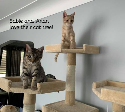 Photo of Sable And Arian