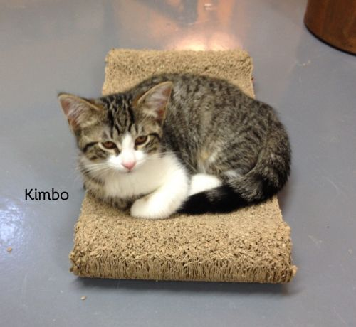 Photo of Kimbo