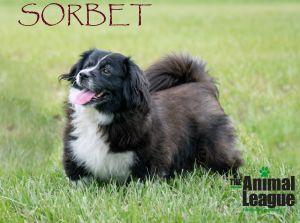 Photo of Sorbet