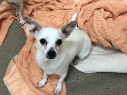 ANGEL - ON EUTHANASIA LIST! Only $45!!!!!