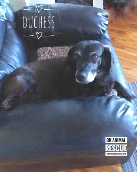 Photo of Duchess Aka Mama