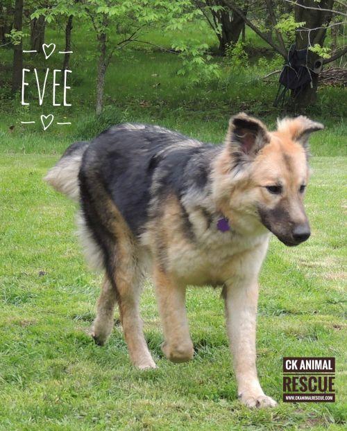 Photo of Evee