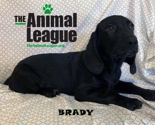 Photo of Brady