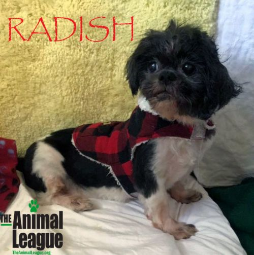 Photo of Radish