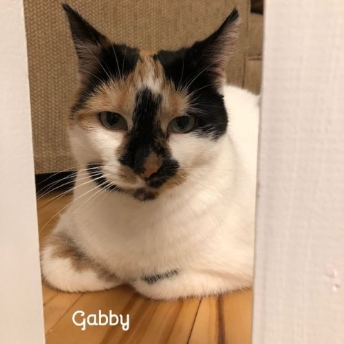 Photo of Gabby