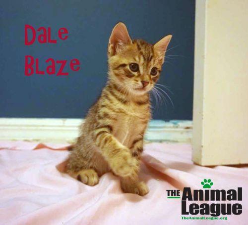 Photo of Dale Blaze