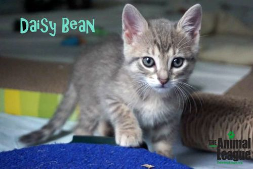 Photo of Daisy Bean
