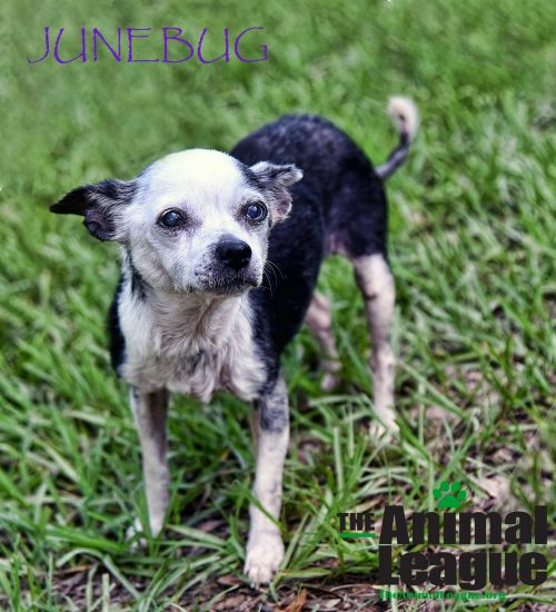 Photo of Junebug