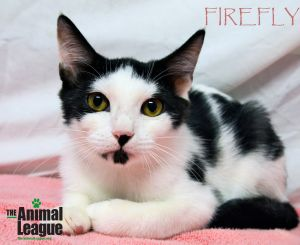 Photo of Firefly