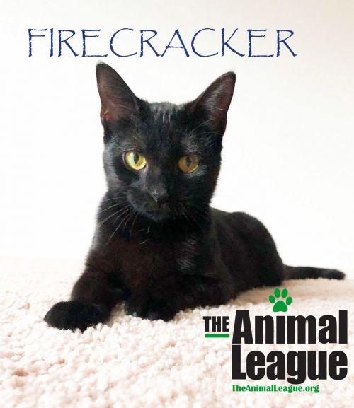 Photo of Firecracker