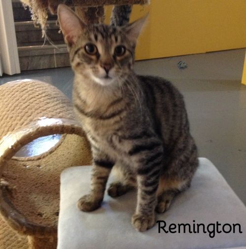 Photo of Remington