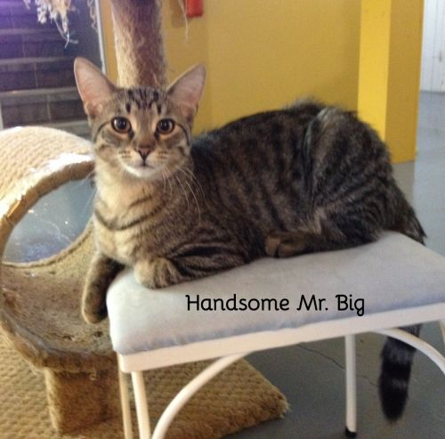 Photo of Mr. Big