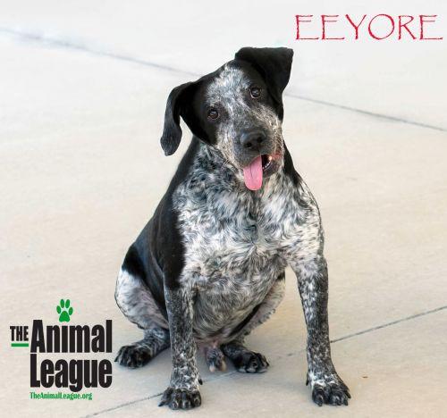 Photo of Eeyore
