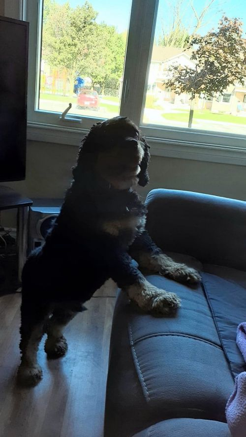 Photo of Charlie The King Charles