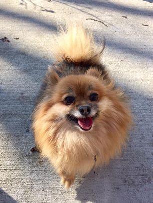 Photo of Jiggy