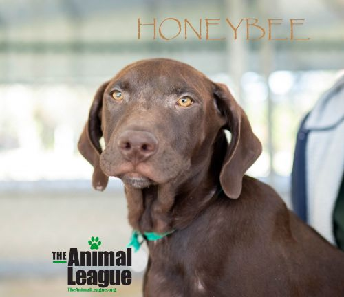 Photo of Honeybee