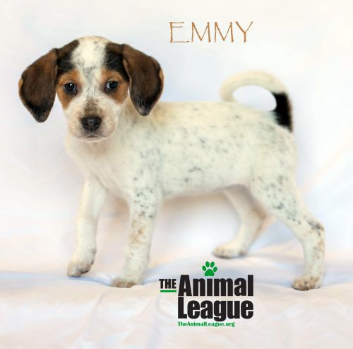 Photo of Emmy
