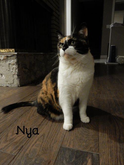 Photo of Nya