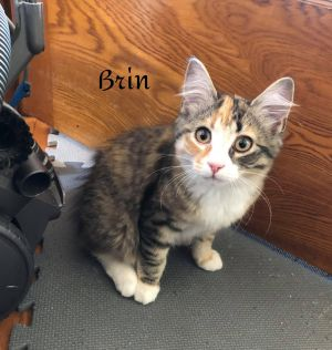 Photo of Brin