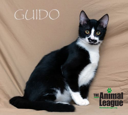Photo of Guido